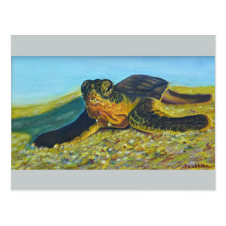 Postcard with an image of Turtle.