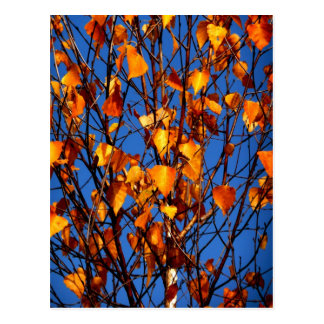 Postcard with autumn leaves
