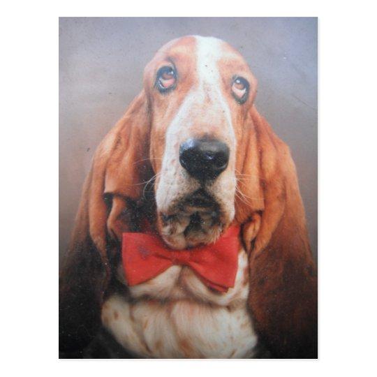 Postcard With Basset Hound In Bow Tie