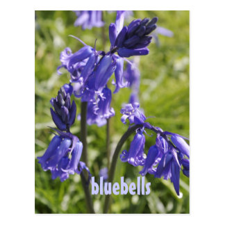 Postcard with bluebell flowers