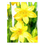 Postcard with Daffodils in watercolor