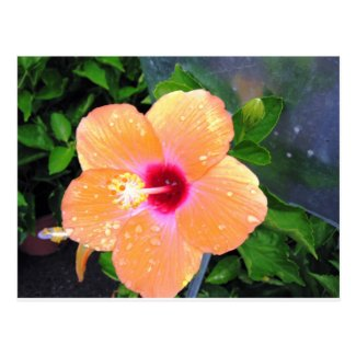 Postcard with Orange Flower