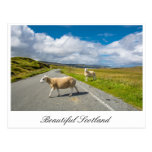 Postcard with sheep in Scotland
