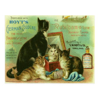 Postcard with Vintage Illustration of Kittens