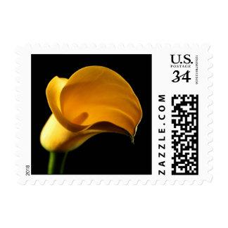 Postcard Yellow Lilly Calla Cala Lily Wedding Post Postage Stamp