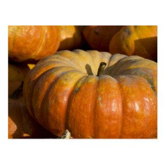 Postcards:  Great Pumpkin Postcard