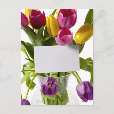 postcards, note cards, birthday cards, bumper stickers,