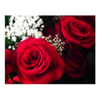 Postcards Red Roses Baby's Breath Bouquet Blank PC