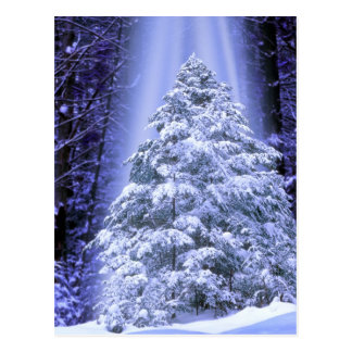POSTCARDS   SPECIAL CHRISTMAS TREE