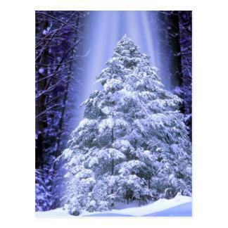 POSTCARDS   SPECIAL CHRISTMAS TREE