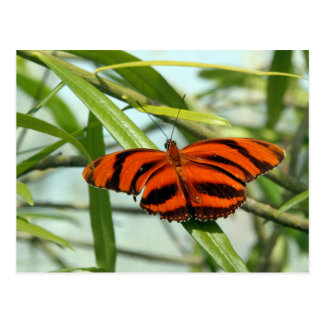 Postcrossing - Banded Orange Heliconian butterfly Postcard