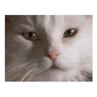 Postcrossing - White Cat postcard