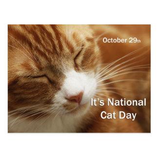 Poste nacional CardOctober 29 del día del gato Tarjeta Postal