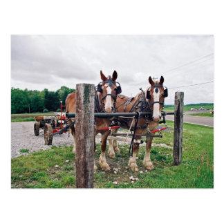 Poste que engancha de Amish Postal