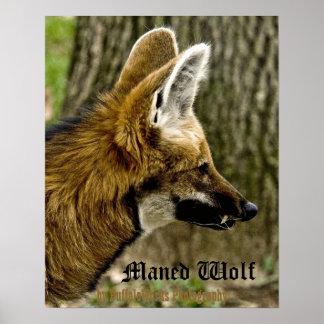 Poster 1529 del lobo crinado