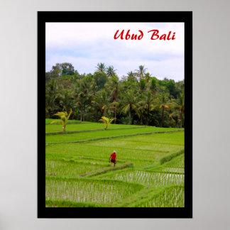 """Poster  (18"""" x 24"""") Rice Fields Ubud Bali"""