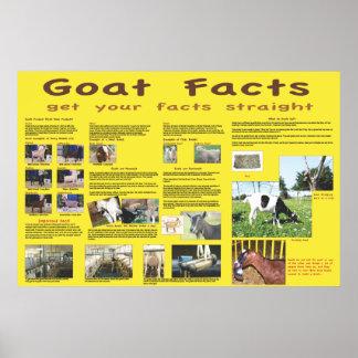 Poster 1 de los hechos de la cabra