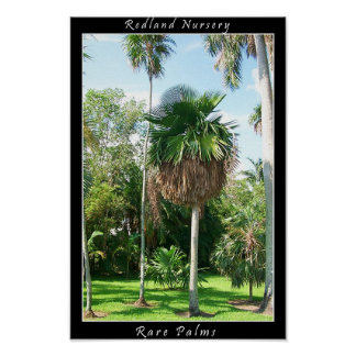 Poster 1 - Jardín tropical de Fairchild