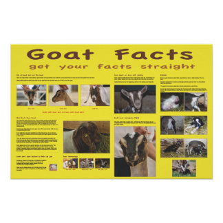 Poster 2 de los hechos de la cabra