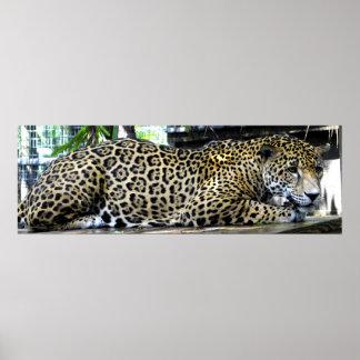 Poster 36x12 del leopardo o más tamaño pequeño sol