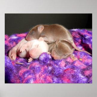 Poster: 3 ratones del bebé