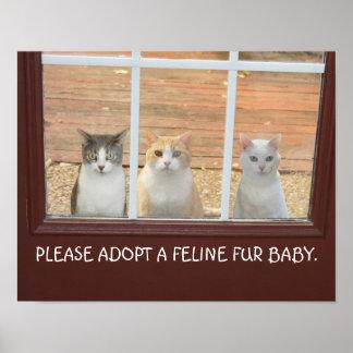 Poster adaptable de la adopción del gato