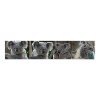 Poster Adopt A Koala Australia Posters