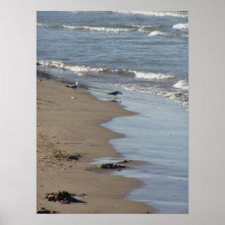 Poster adoptivo de la playa