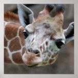 Poster adorable de la jirafa