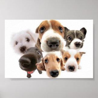 Poster adorable de los perros