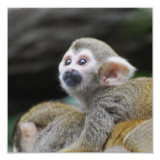 Poster adorable del mono de ardilla