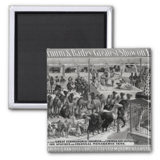 Poster advertising, 'The Barnum and Bailey 2 Inch Square Magnet