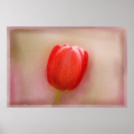 Poster agrietado del alabastro del tulipán rojo so