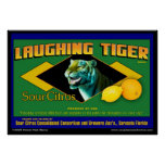 Poster amargo de risa de la fruta cítrica del tigr