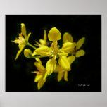 Poster amarillo de la flor
