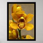 Poster amarillo de la orquídea