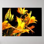 Poster amarillo de los daylilies