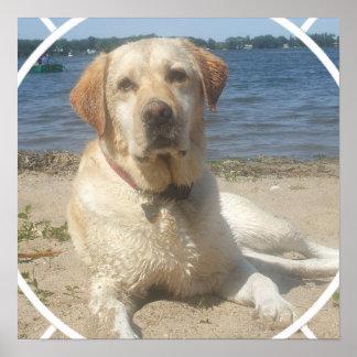 Poster amarillo del perro del labrador retriever