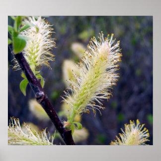 Poster amarillo del Wildflower 1 del cepillo de bo