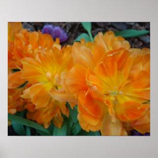Poster amarillo y anaranjado de los pétalos 2 del