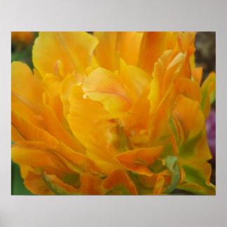 Poster amarillo y anaranjado de los pétalos del