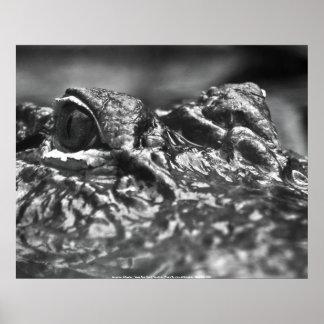 POSTER- American Alligator - Cape Fear North ... Poster