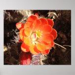 Poster anaranjado de la flor del cactus de erizo