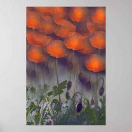 Poster anaranjado de los cielos de la amapola de l