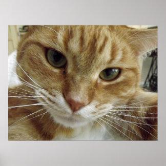 Poster anaranjado del gato de Tabby