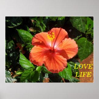 Poster anaranjado del hibisco