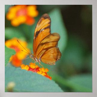 Poster anaranjado minúsculo de la mariposa