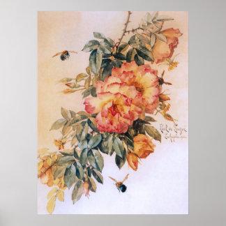 Poster anaranjado pálido del vintage de los rosas