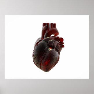 poster anatómico-correcto del corazón