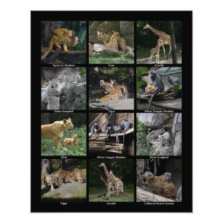 Poster animal del collage del bebé impresión fotográfica